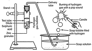 Free ncert solutions for 12th class biology reproduction in a in place of zinc granules same amount of zinc dust is taken in the test tube b instead of dilute sulphuric acid dilute hydrochloric acid is taken ccuart Images