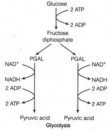 Free Ncert Solutions for 11th Cl Biology Respiration In Plants ... on