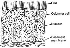 free ncert solutions for 9th class science tissues