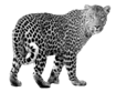 Image result for leopard png