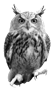 Image result for Owl png