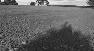 Image result for clayey soil