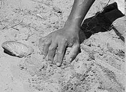 Image result for Sandy Soil