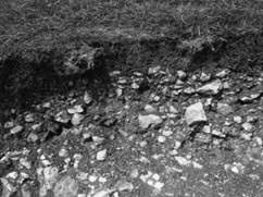 Image result for Chalky Soil