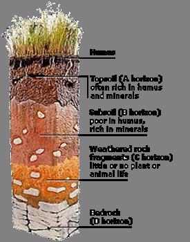 Jee main jee advanced cbse neet iit free study for Soil profile for kids