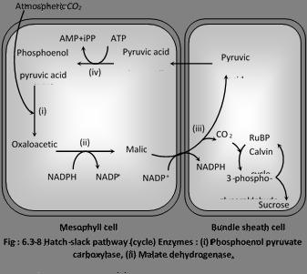 Oxaloacetic Acid Decarboxylation JEE Main, JEE Advanced...