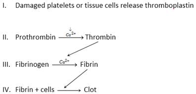 clot solubility essay